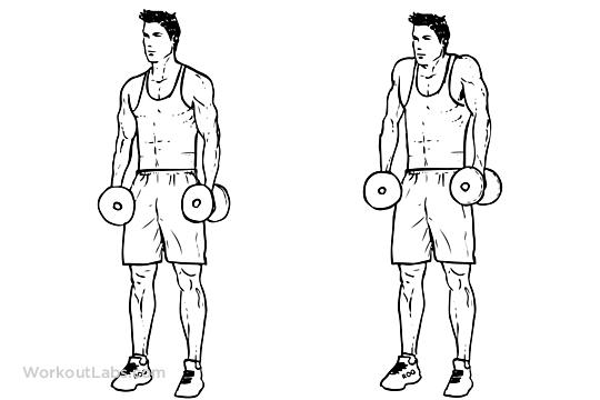 Omuz Geliştiren Temel 3 Hareket Dumbbell Shrug gymturk
