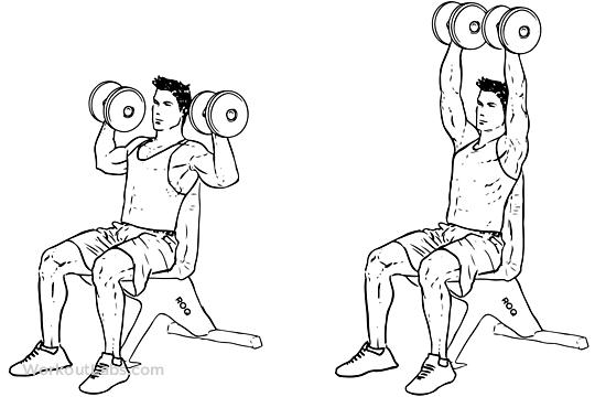 Omuz Geliştiren Temel 3 Hareket gymturk Dumbell shoulder press