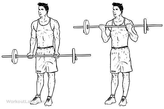 Kollarınız Genişleten Biceps Hareketlerigymturk Barbell_Curle