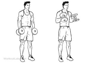Kollarınız Genişleten Biceps Hareketlerigymturk Hammer_Curls