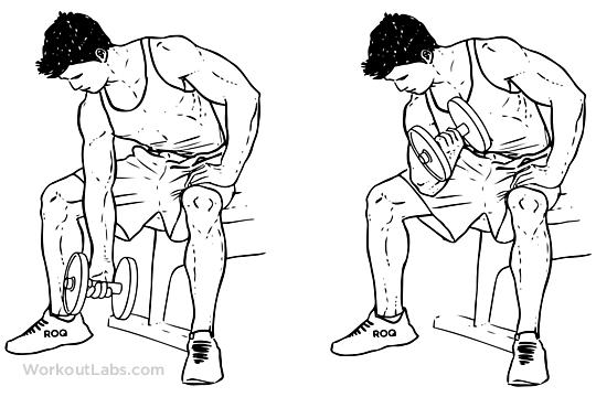 Kollarınız Genişleten Biceps Hareketlerigymturk concentration_curls