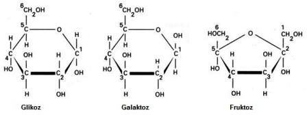 Karbonhidrat'ın Yapısı