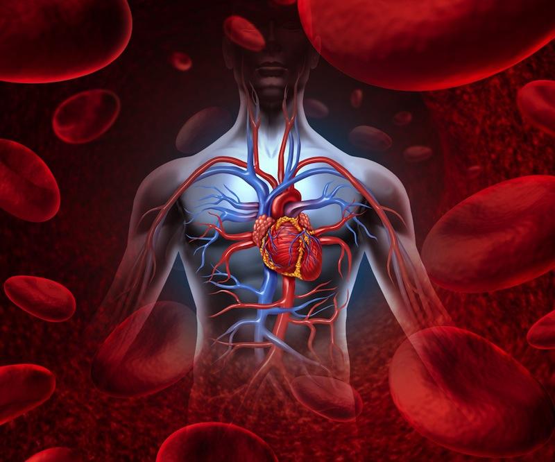 circulatory-system-diagram-130925-gymturk